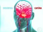 Sinusite, cafeína, apneia do sono, ATM e TPM causam dor de cabeça