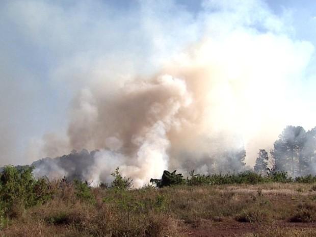 O fogo levou quase cinco horas para ser controlado devido à extensão do terreno  (Foto: Reprodução/EPTV)