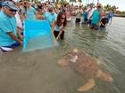 Após 2 meses, tartaruga-cabeçuda é devolvida ao mar na Flórida