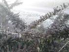 Paraná amanhece com temperaturas negativas em vários municípios