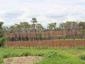 Áreas preparadas para o plantio e a espera de chuva podem ser vistas por todo o município de Elesbão Veloso (Foto: Pedro Santiago/G1)