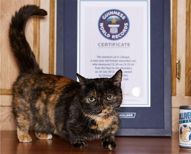 Lilieput foi reconhecida pelo livro dos recordes como o menor gato do mundo (Foto: Reprodução/Facebook/Guinness)