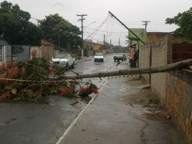 arvore caiu em cima de rede eletrica em cabo frio (Foto: Felipe Fidelis Silvano/Arquivo)