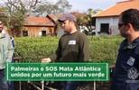 Parceria entre Palmeiras e SOS Mata Atlântica