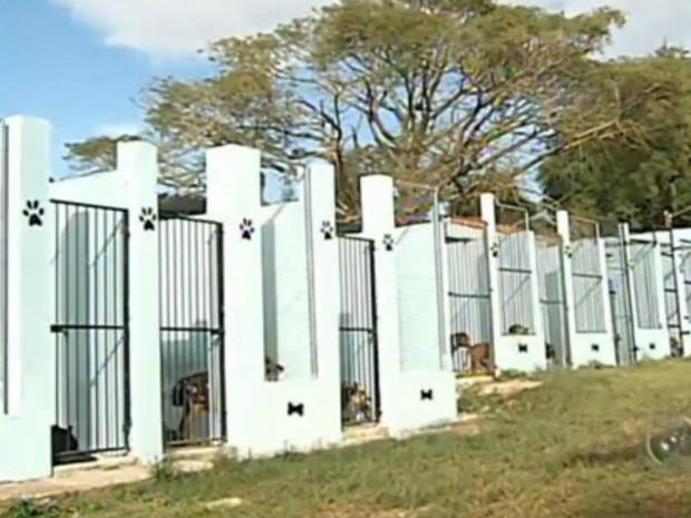 Uipa cuida de cães e gatos abandonados em Itapetininga (Foto: Reprodução/ TV TEM)