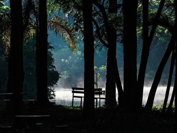 Horto Florestal de Piracicaba (Foto: Bruno Fernandes/Arquivo pessoal)