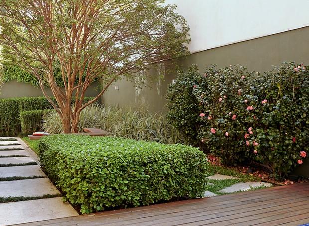11 esp cies de cerca vivas casa e jardim paisagismo for Especies de arbustos