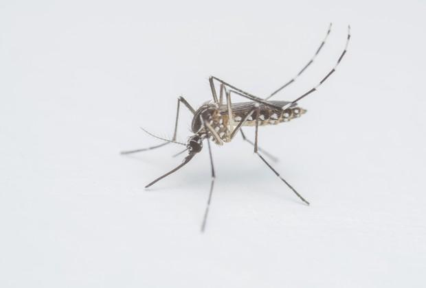 O mosquito que ameaça um dos períodos mais importantes da vida: os primeiros mil dias (Foto: Thinkstock)