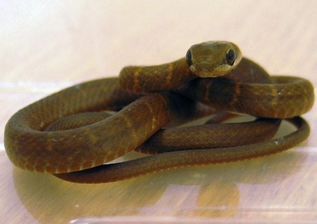 Cobra foi encontrada em assento de avião vindo de Cancun.  (Foto: AP)