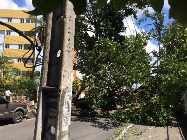 Árvore caiu próximo ao Centro Administrativo do Estado (Foto: Walter Paparazzo/G1)
