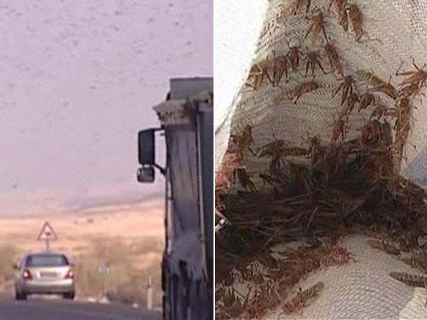 Sul de Israel e Faixa de Gaza vêm sendo atacados por nuvens de gafanhotos (Foto: BBC)
