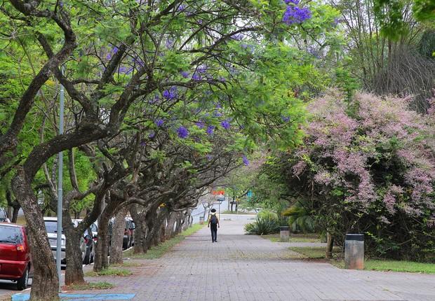 Campus da USP no Butantã, em São Paulo (Foto: Marcos Santos/USP Imagens)