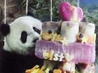 Primeiro panda nascido em Taiwan comemora aniversário de 1 ano