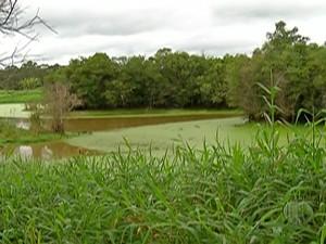 Lagoa de César de Souza, em Mogi das Cruzes, se recupera  (Foto: Reprodução/TV Diário)