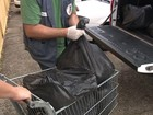 Ações policiais apreendem toneladas de mercadorias vencidas no RS