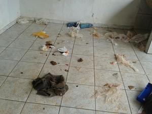 Cães em situação de maus-tratos são resgatados em Uberlândia (Foto: Polícia Militar/Divulgação)
