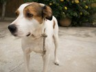 CCZ de Pres. Prudente confirma mais 35 casos de leishmaniose canina
