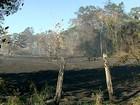 Incêndio em mata é controlado, mas fogo atinge Reserva de Sooretama