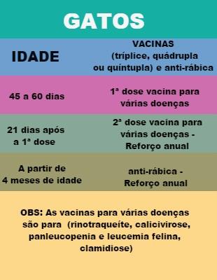 Datas de vacinação indicadas por veterinária (Foto: É o Bicho)