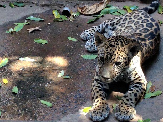 Dingo tem cinco meses e pesa cerca de 8 kg (Foto: Cristina Mayumi/ TVCA)