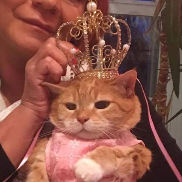 A gatinha Luna que ganhou um festão de 15 anos (Foto: Reprodução/Facebook)