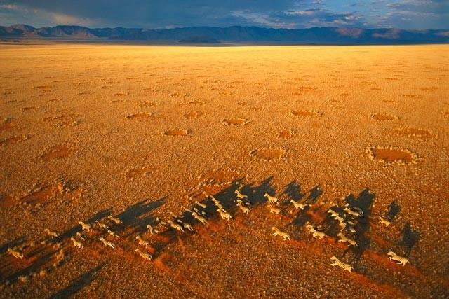 Círculos em que a vegetação não aparece são chamados de 'anéis de fadas' (Foto: Ann Scott/NamibRand Nature Reserve)