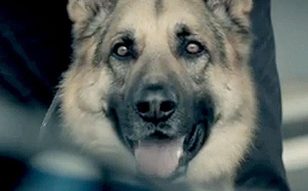 FRAME Barrichello comercial corrida cão (Foto: Reprodução)