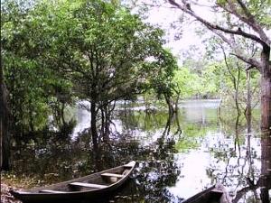 Florestas e áreas alagadas da Amazônia são pesquisadas  (Foto: Leandro Tapajós/G1 AM)