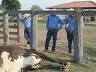Polícia investiga a matança de vacas na fazenda Cedro, em Marabá
