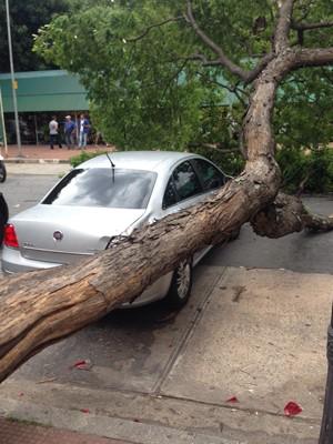 Carro de vereador Andrea Matarazzo é atingido por queda de árvore no Centro de SP (Foto: Arquivo pessoal)