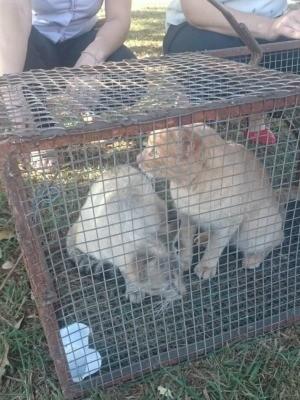 Dois gatos levados para castração (Foto: Agepen/ Divulgação)