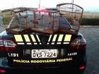 Homem é preso por transportar pássaros silvestres em Pilar