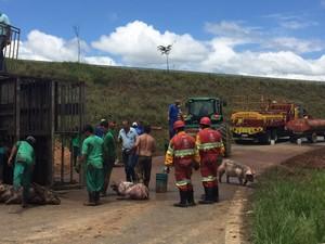 Carreta com porcos tombous na rodovia Raposo Tavares em Capela do Alto (Foto: Ana Diniz / TV Tem)