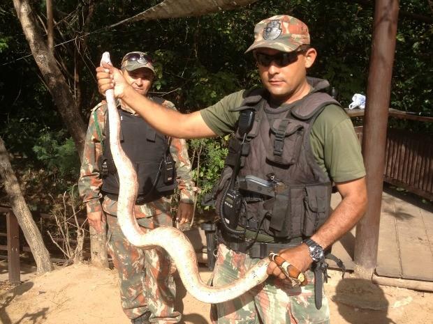 Animal foi resgatado e levado à Polícia Ambiental (Foto: Addler Pinheiro/Arquivo Pessoal)