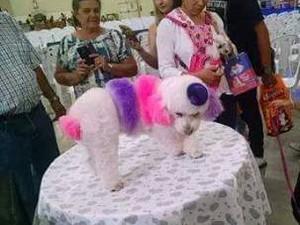Donos investem em tratamentos estéticos para animais de estimação (Foto: Renata Araújo/Arquivo pessoal)