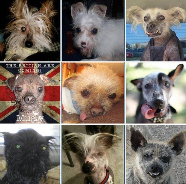 A partir da esquerda e de cima para baixo, Peeps, Harley, Creature, Mugly, Josie, Reggie, Monkey, Marco e Mutley Wycuff, que concorrem ao prêmio. (Foto: Reprodução)