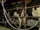 Valor pago aos produtores pelo litro do leite bate recorde real em julho