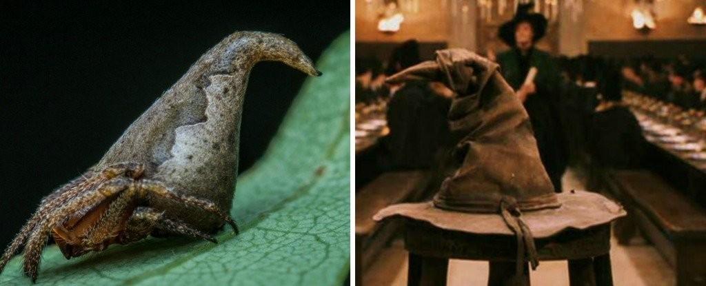 aranha (Foto: Sumukha J. N/Warner Bros/ScienceAlert)