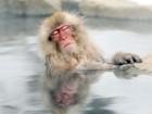 Para fugir do frio, macacos 'correm' para fonte de água térmica no Japão