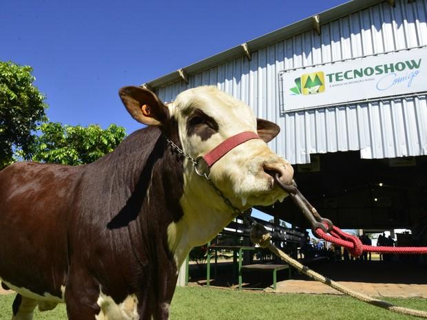 Exposição da Tecnoshow apresenta mais de 1 mil animais em Rio Verde Goiás (Foto: Divulgação/Cristiano Borges)