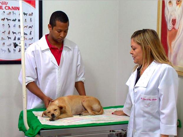 Cadela foi atendida em clínica veterinária. (Foto: Reprodução/TV Gazeta)