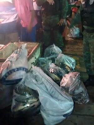 Pescado estava armazenado em uma caixa de isopor  (Foto: Divulgação/Batalhão Ambiental)