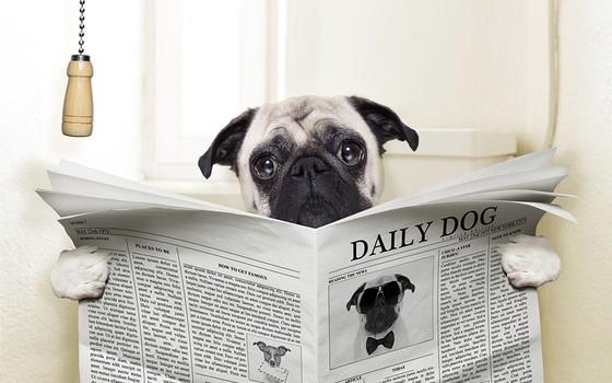 Os perigos da diarreia em cães (Foto: Thinkstock/Getty Images)