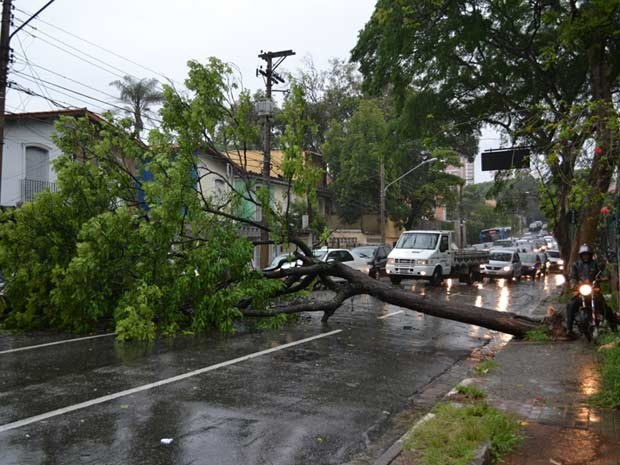 Árvore caiu na esquina da Avenida dos Bandeirantes com a Rua Conde de Porto Alegre.  Segundo o leitor, que mora em frente ao local, a árvore não atingiu nenhum carro na queda. O trânsito está bastante prejudicado na região. (Foto:  Luiz Carlos Guimaraes/VC no G1)