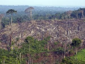 Area de floresta devastada por fogo no Parque Nacional de Jamanxim, no Pará (Foto: Antônio Scorza/Arquivo/AFP)