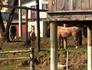 Cavalos em CTG geram polêmica em Gravataí (Reprodução/RBS TV)