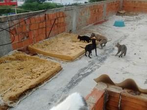 Animais no telhado (Foto: Patrian Junior / Arquivo Pessoal)