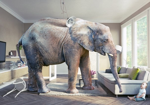 Big elephant and the baby  in the living room.Photo combination concept (Foto: Getty Images/iStockphoto)