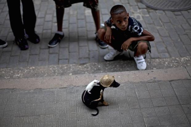 Dono usa animais para faturar dinheiro com turistas. (Foto: Ramon Espinosa/AP)