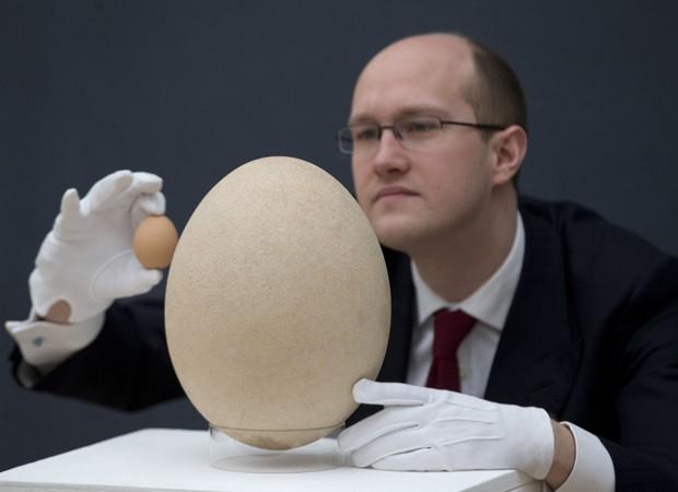Especialista da Christie's compara ovo de ave extinta que vai a leilão com um de galinha (Foto: Matt Dunham/AP)